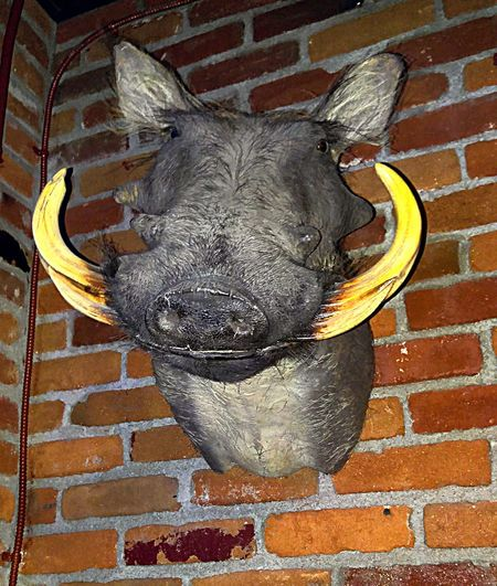 Taking Photos Check This Out From My Point Of View I'm Boared Wildlife Taxidermy Wild Boar