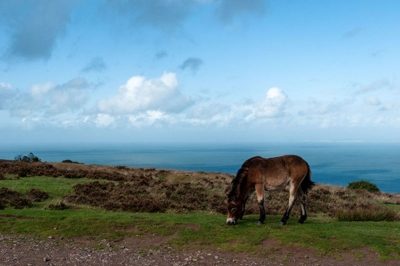 View of horse on field by sea against sky