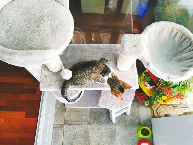 A Bird's Eye View Cat Babycat Cat Tree Taking Photos Enjoying Life Animal Cute Cat Hunting  Little Panter
