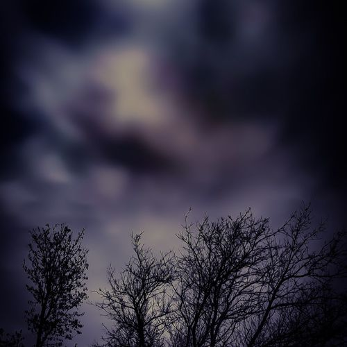 Sky Low Angle View No People Outdoors Tree Nature Cloud - Sky Silhouette Beauty In Nature Day Unique Photography Awesome! Beauty All Around Likeandfollow Growth Stormclouds Purpleandblack Clouds Nightskyphotography Vibrant Color Scenics Backgrounds