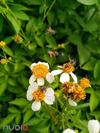 Bee Bee Flower Insect One Animal Animals In The Wild Animal Themes Nature Plant