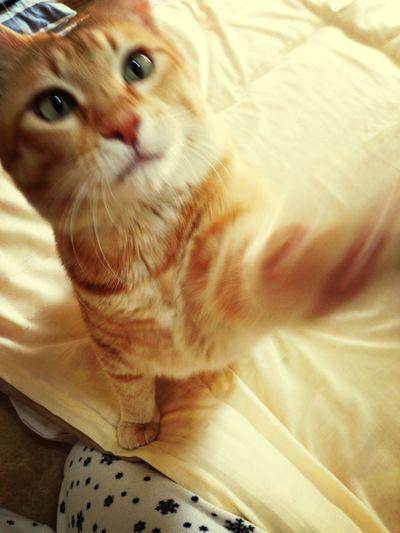 Boku Cat Staring.. Oh!!))