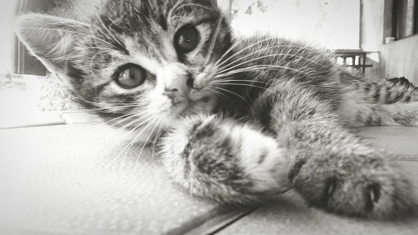 Cat♡ Love Animal Love My Cat❤️ Enjoying Life Blackandwhite Black & White Macak ^-^ maza mala ♡