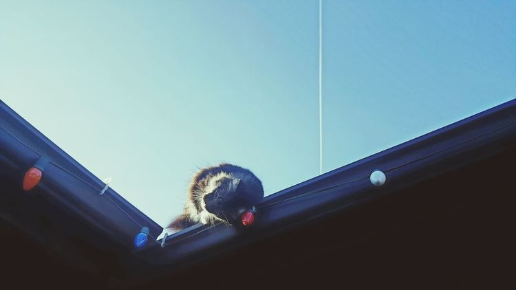 Blue Low Angle View Sky No People Close-up Day Indoors  Cats Of EyeEm Pets Cat Outdoors