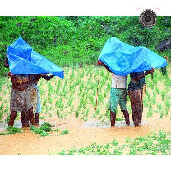 ~~~~~~~~~~~~~~~~~~~~~~~~~~~~~~~ GADESHWAR FARMERS TAKE SHELTER FROM RAIN UNDER SHEETS IN THEIR PADDY FIELD 🌾 🌾 🌾 🌾 🌾 ~~~~~~~~~~~~~~~~~~~~~~~~~~~~~~~ All images are subject to ©copyright No repost, regram or reproduce without prior permission All rights reserved Farmers Crop  Paddyfield Gadeshwardam Touristspot Navimumbai Panvel Newpanvel Dhodaniriver Raigad Maharashtra_ig India Convexrevolution Yin_india _soi _oye Indianphotographer Desidiaries Salisonline Incredibleindia Photographers_of_india Click_india_click Everydaymumbai Things2doinmumbai Explorethroughcamera