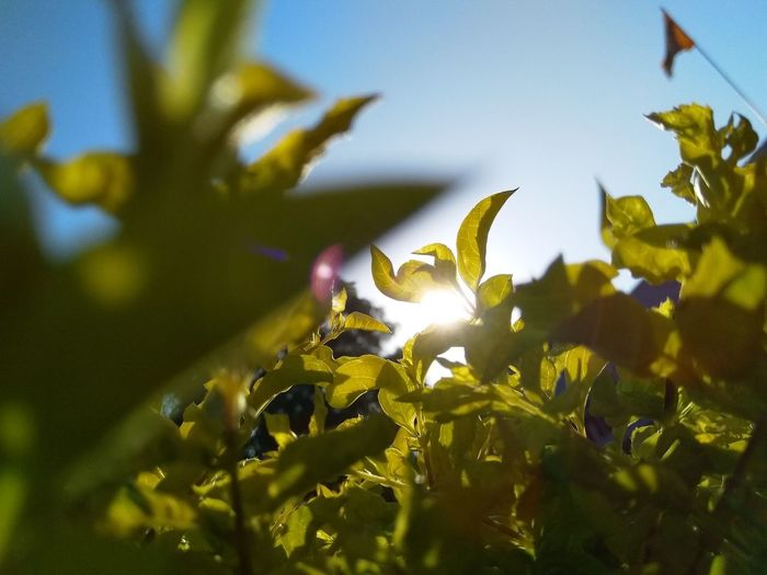 Close-up of leaves on plant in field against sky