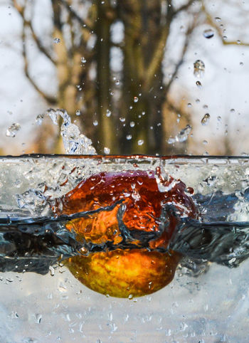 Apple Close-up Drop Drops Drops Of Water Freeze Motion Freshness Fruit Fruits High Speed Motion Nature Outdoors Outside Red Splashing Water