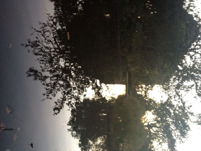 At Carlton Gardens