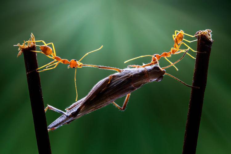 team work Ant