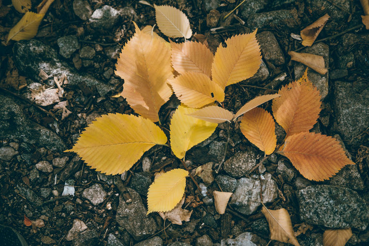 Fall Colors Backgrounds Close-up Day Fall Background Flower Flower Head Fragility Freshness High Angle View Leaf Nature No People Outdoors Yellow