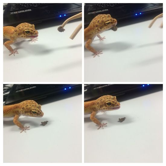 He laughed after it failed to eat the food!