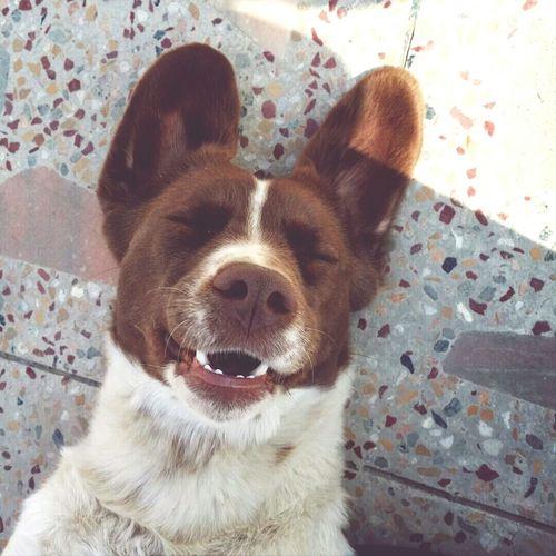 Cute Pets , Pets ,? ?Dog , Brownie ??
