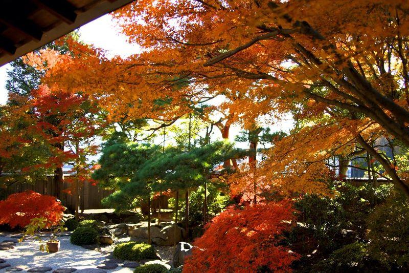 Tree Enjoying Life Checking In Photo