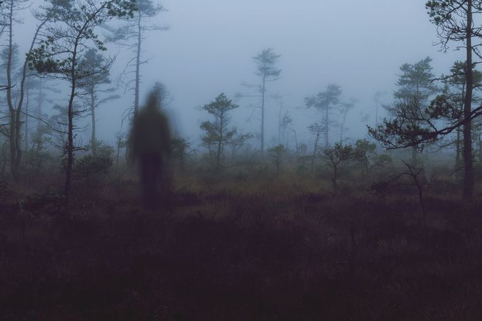 Don't go into the woods alone Fog Swamp Uncertainty  SlenderMan Scary Spooky Tree Nature Forest Growth Landscape Real People One Person Tranquil Scene Hazy  EyeEm Ready