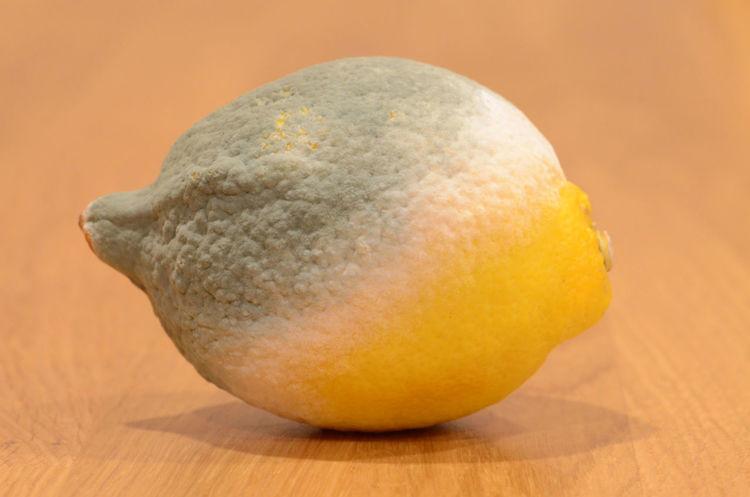 Semi-mouldy lemon Decomposition Fruit Lemon Mouldy Still Life