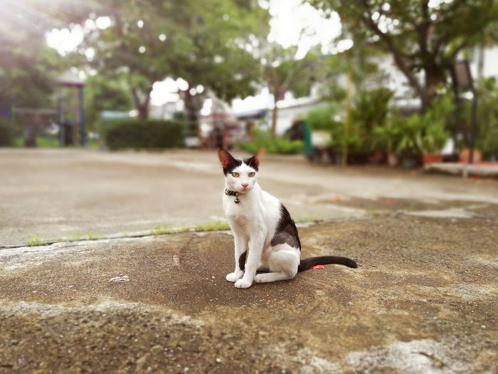 Portrait of cat sitting on floor at park