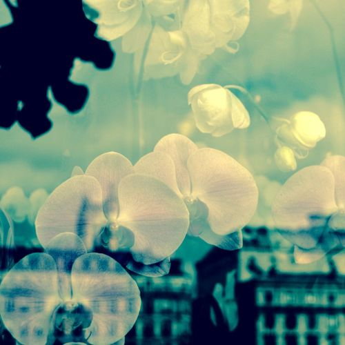 Double Exposure Of Orchids And Buildings In City