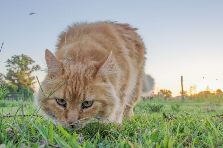 Close-up of cat on field against clear sky