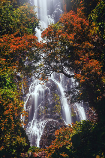 Low angle view of waterfall in forest during autumn