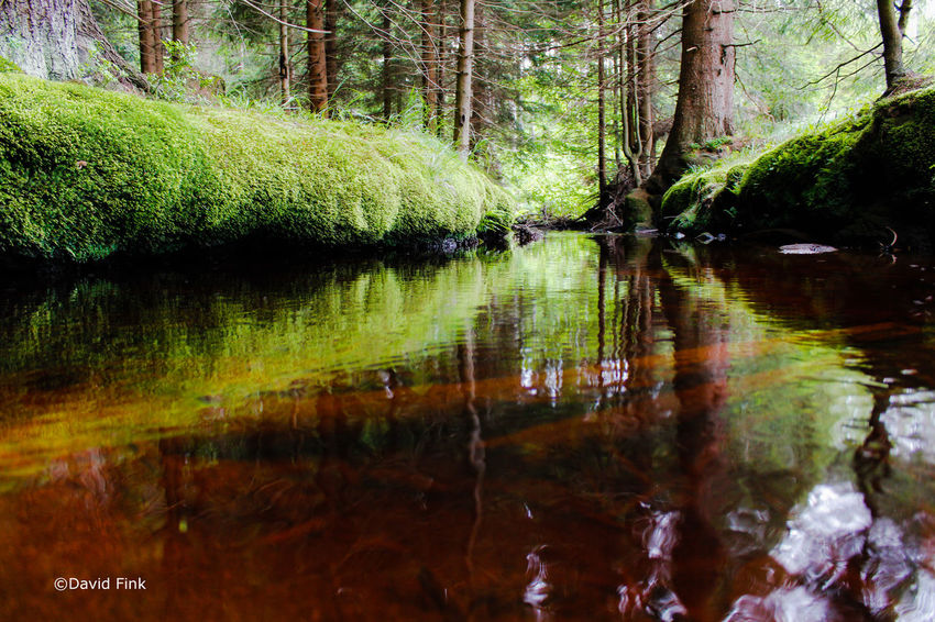 Forest Forest Photography Forest River Nature Poland River Water Water Reflections