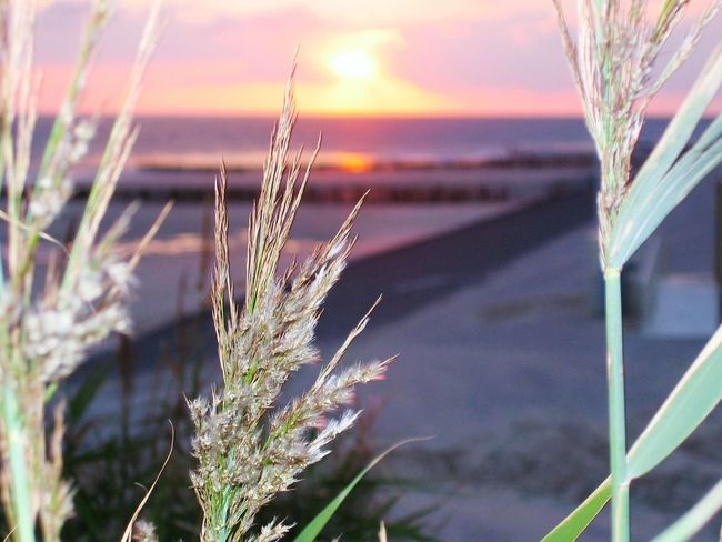 Grass Sunset_captures Seascape Photography Nature_ Collection Sunset_collection Sea_collection Sunset View. ObjectPhotography Focus Of Foreground Focus On Details EyeEm Best Shots
