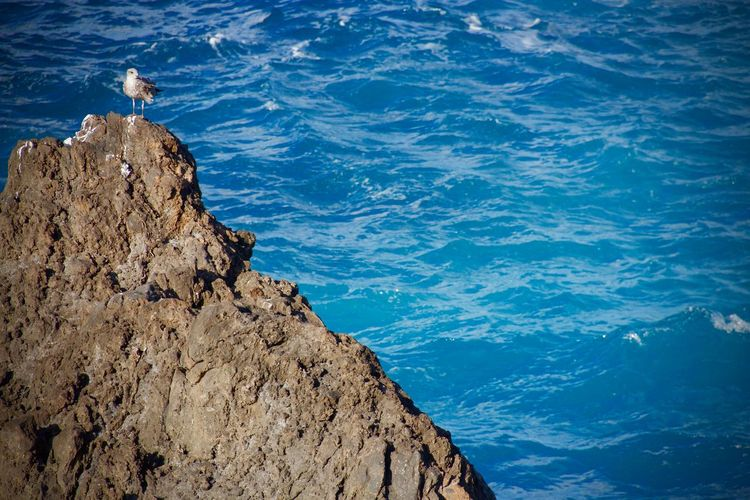 High angle view of seagull perching on rock by sea