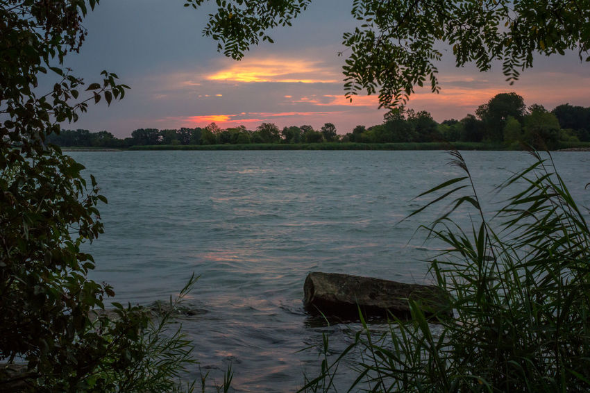 Detroit River sunrise Detroit River Stoney Island Beauty In Nature Cloud - Sky Nature No People Reeds Riverscape Rock - Object Scenics Silhouette Sunrise Sunrise And Clouds Tranquil Scene Tranquility Tree Water