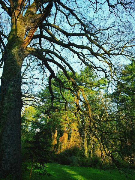 Tree Sun Light