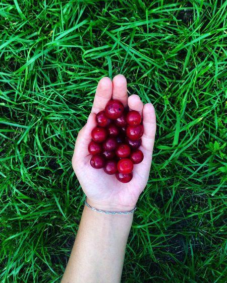 Cherry Red Green Taste Love Summer Tasty Good Day VSCO Vscocam Hand