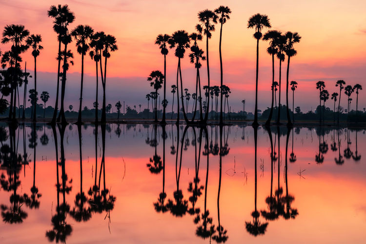 Silhouette palm trees by lake against romantic sky at sunset