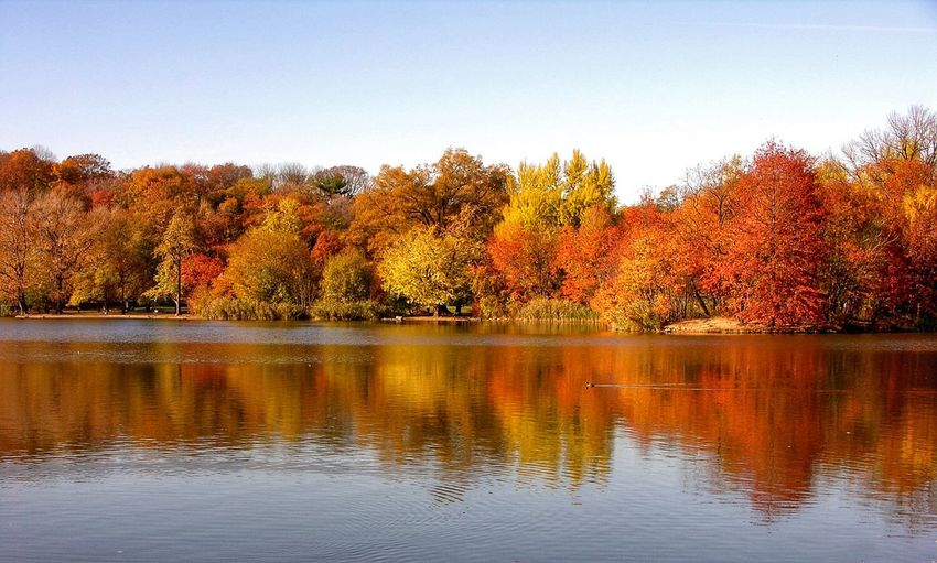 Capture The Moment Fall Autumn Lake Trees Brooklyn Prospect Park Leaves Water Reflection