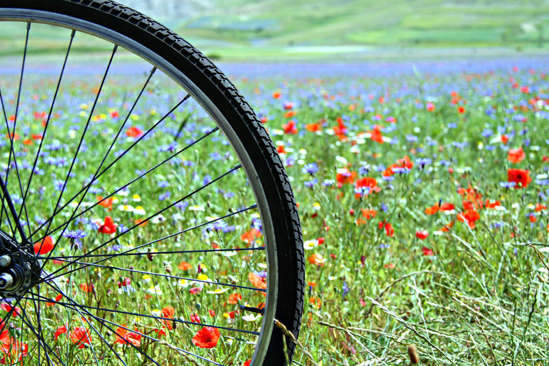 Bikers EyeEmSelect Flowering Summer Views SummerFields Beauty In Nature Bicicletta Bicycle Close-up Day Field Flower Focus On Foreground Grass Green Color Land Vehicle Metal Mode Of Transportation Nature No People Ornamental Garden Outdoors Plant Spoke Tire Transportation Vehicle Part Wheel
