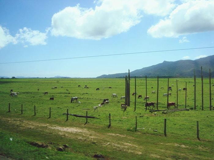 Santa Catarina Agriculture Farm Field Rural Scene No People Sky Nature Outdoors Cloud - Sky Landscape Large Group Of Animals Mountain Beauty In Nature Day Grass Food Bird Tree Animal Themes Tea Crop