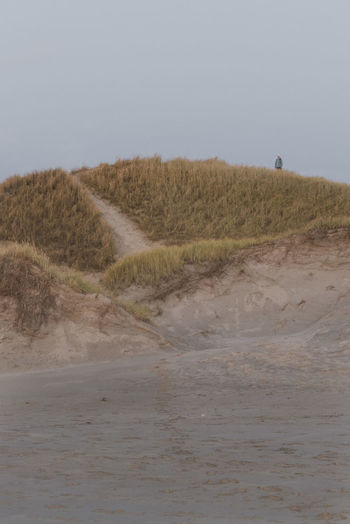 Enjoying The View Grass Relaxing Beach Beauty In Nature Day Grass Landscape Mammal Nature No People Outdoors Sand Sand Dune Sky
