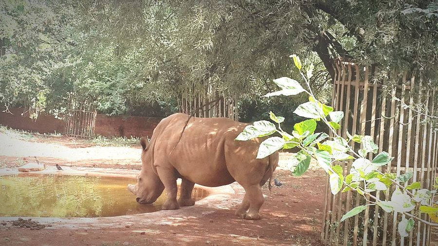 Save the rhino Pretoria Zoo Save The Rhino