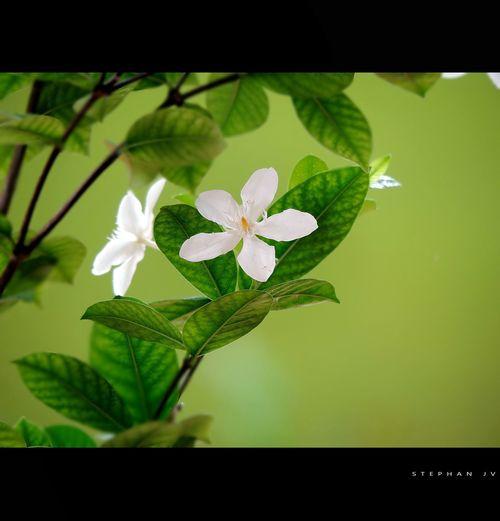 Flowers Love Green Flowerlovers Plants 🌱