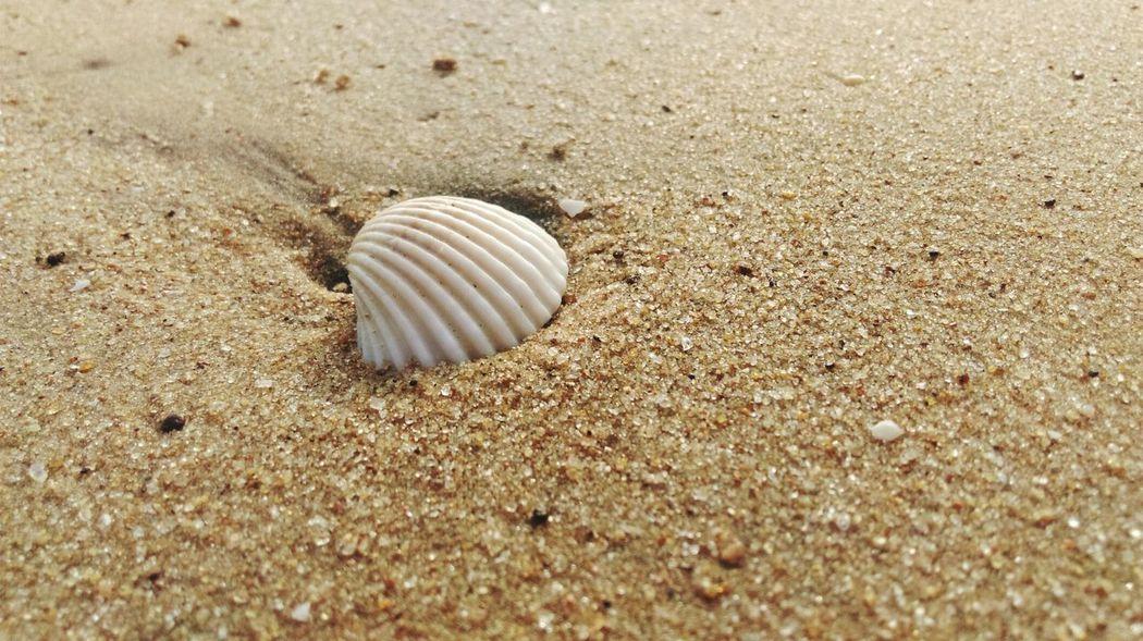 Shore Sand Shore Beach Life Beach Photography Micro Nature