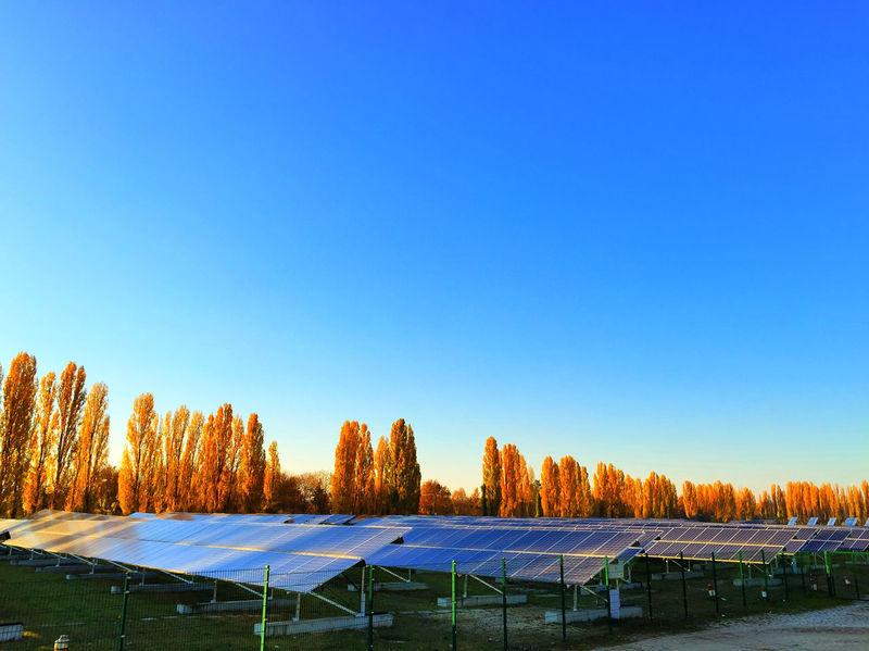 solar energy plant Blue Sky Clear Sky Sky Solar Solar Collector Solar Energy Solar Energy Plant Solar Panel Solar Panels Solar Plant Sun Sun Energy Trees