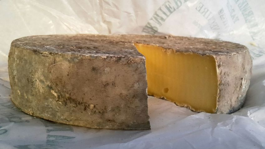 Saint Nectaire French Cheese bought in the production Farm Close-up Auvergne Showcase July