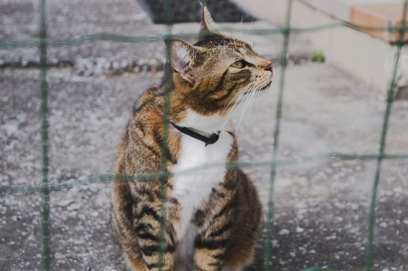 Close-Up Of Cat Behind Fence