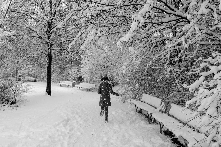 Snowfall Fujifilmph Beutiful  Beauty In Nature Snow ❄ Blackandwhite Winter Is Coming Winter Tree Sky Way Girl Running Benches Tracks In The Snow