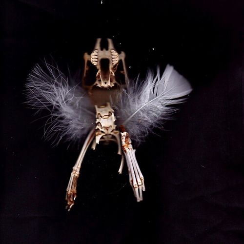 Bones Feathers Nature Naturephotography Close Up Assemblage