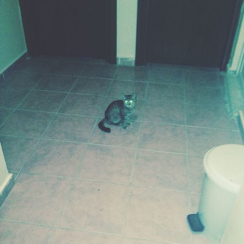 Yurda pisicik girmiş ?