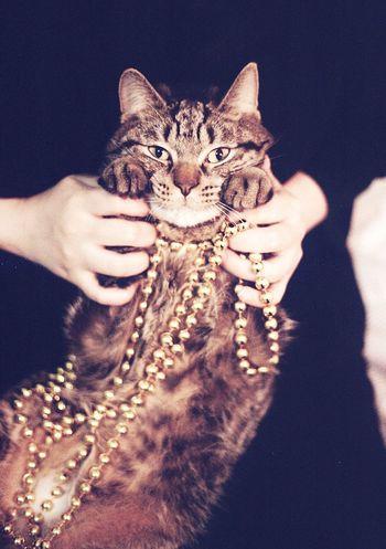 Korea Fancy Filmisnotdead Analog Film Photography Domestic Cat One Person Human Body Part One Animal