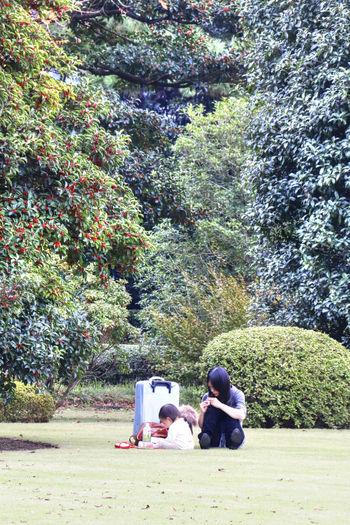 Day Garden Growth Japan Japanese Garden Manicured Nature Tokyo Tree Well-kept