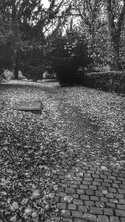Black And White Collection  Autumn Leaves Leaves Are Falling Tree Porn