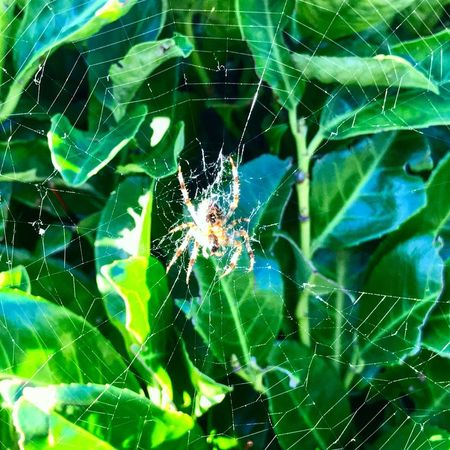 Spider Web Fragility Close-up Spider Arachnid One Animal Animal Themes Animal Wildlife Animal Invertebrate Green Color Nature Beauty In Nature Focus On Foreground