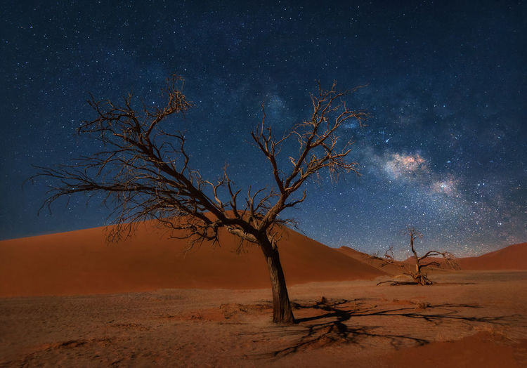 Bare Tree On Desert Against Sky At Night