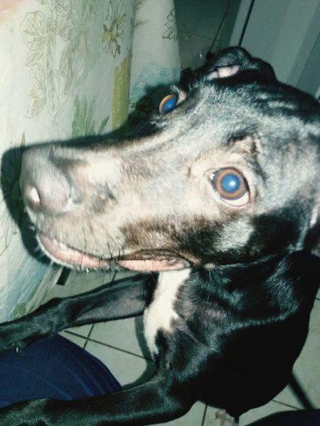 Faminta, Mamai!Playing With The Animals Betina My Love❤ My Dog MinhaDraga I Love My Dog