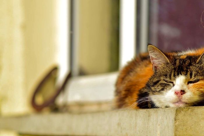 My cat napping on the windowsill Cat Napping Tortoiseshell Cat Calico Cat Cat On The Window